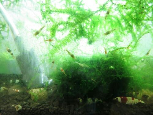 PhotoHenshu_20120926125151.jpg