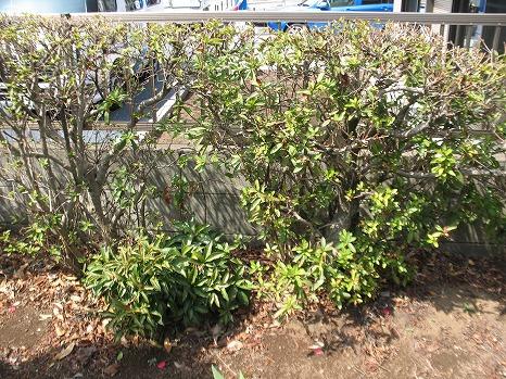植え木場 (5)