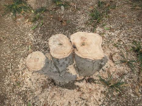 植え木場 (4)