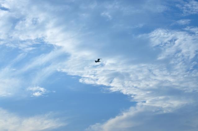 Sky-02