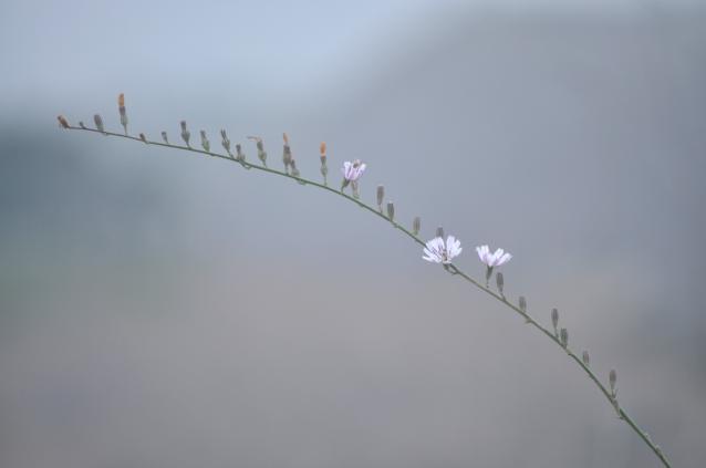 曇り後晴れ-03
