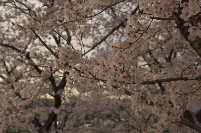 raws桜2min