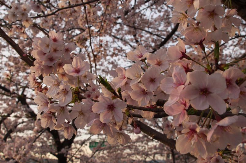 raw桜3min