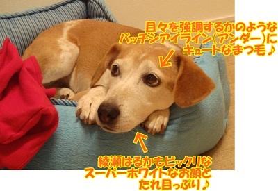 11_08_16_01.jpg