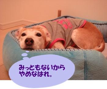 11_08_16_06.jpg