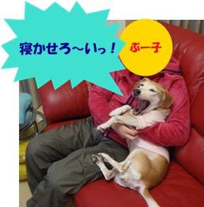 11_10_27_06a.jpg