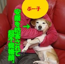 11_10_27_07.jpg