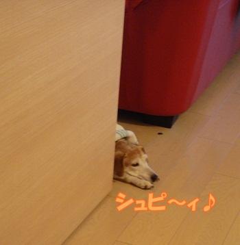 11_11_18_01.jpg