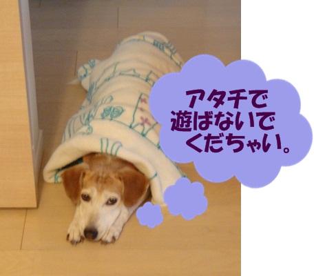 11_11_18_05.jpg