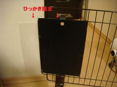 DSC07803-01.jpg