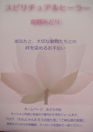 DSC08896.jpg