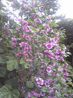 flower 2013may