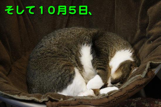 _MG_1741_Rそして10月5日、