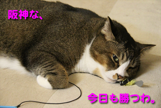 IMG_0219_R阪神な、今日も勝つわ。
