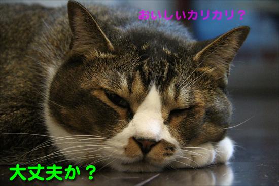 IMG_0253_Rおいしいカリカリ?