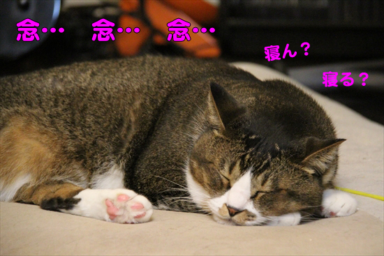 IMG_0569_R念… 念… 念…