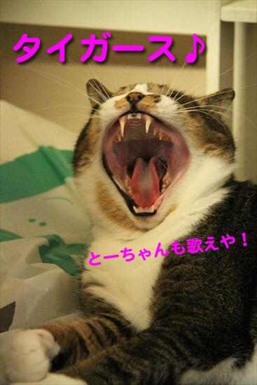 IMG_0067_Rタイガース とーちゃんも歌えや!