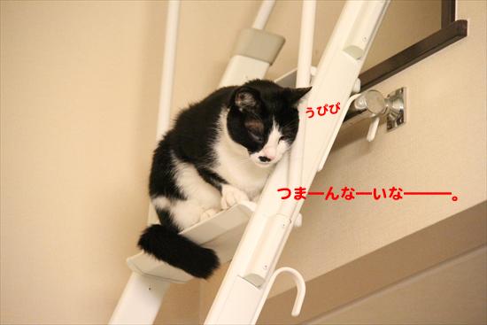 IMG_0588_Rつま―んな―いな―――。