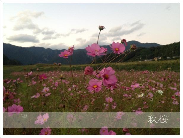 IMG_3370.jpg