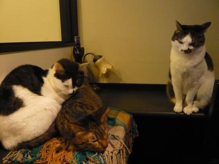 ラーとレアとモアニ