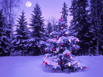 12月はクリスマスライブ