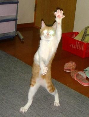 猫の天地魔闘の構え