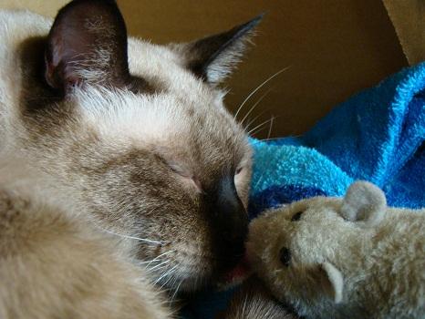 ねずみと愛猫3