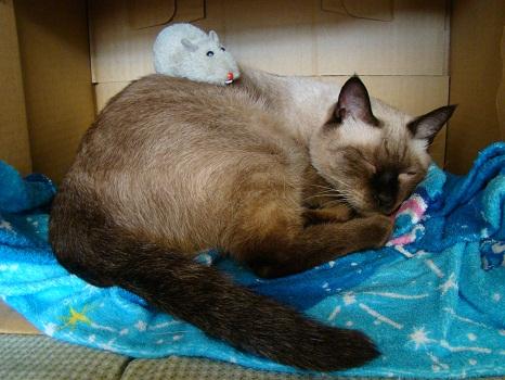 ねずみと愛猫4