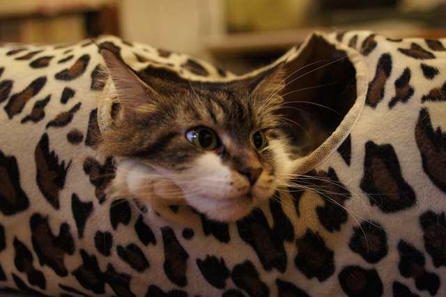 トンネル猫5