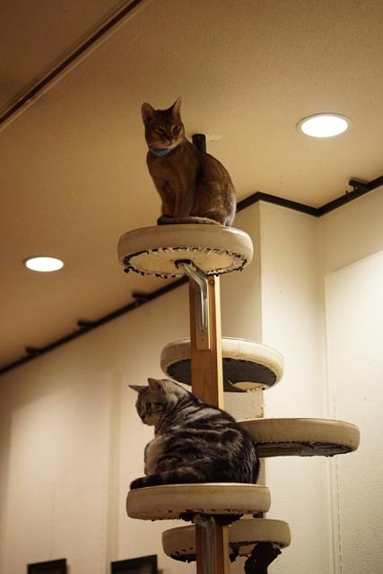 ティモ、ミッコ、タワー