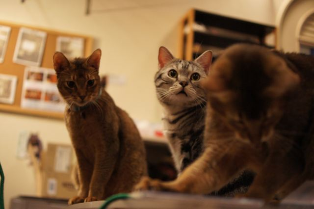 ティモ、ミッコ、アビ