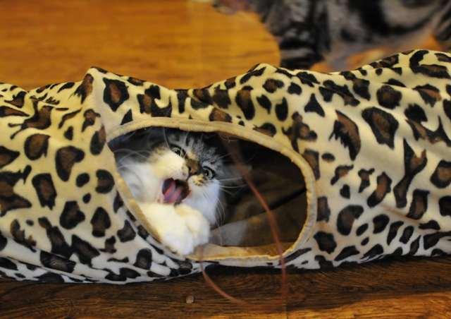 トンネル猫4