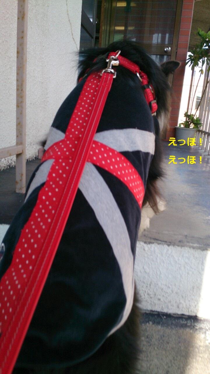 IMG_20131128_200236.jpg