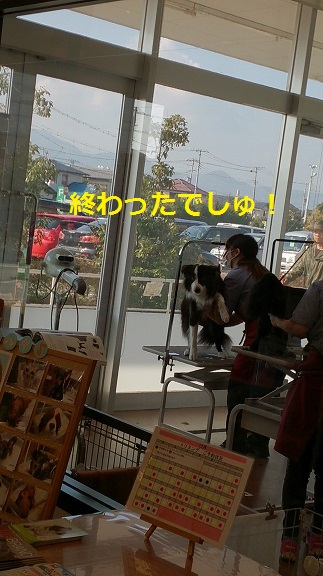 s-DSC_3284.jpg