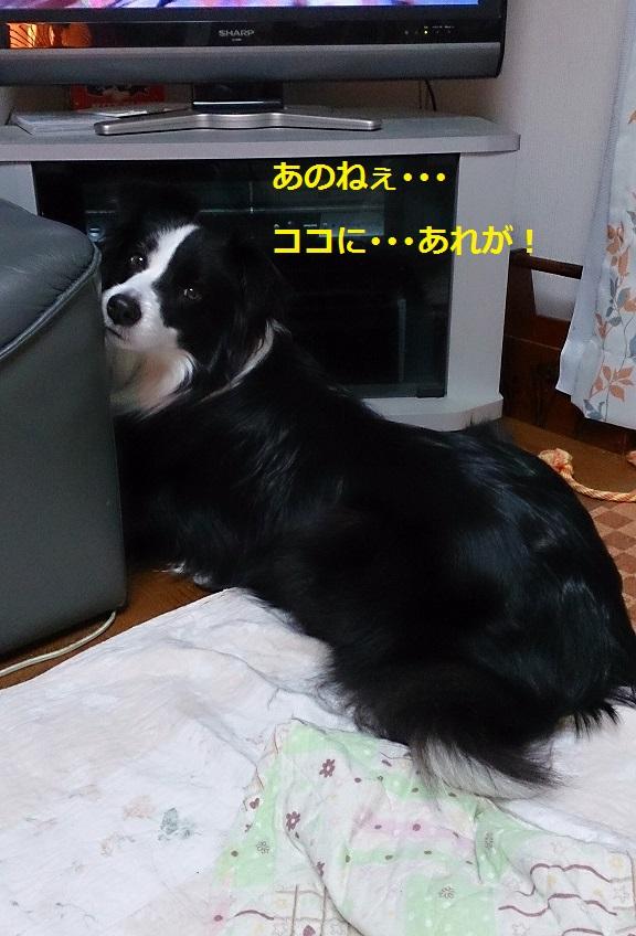 s-IMG_20131228_185315.jpg
