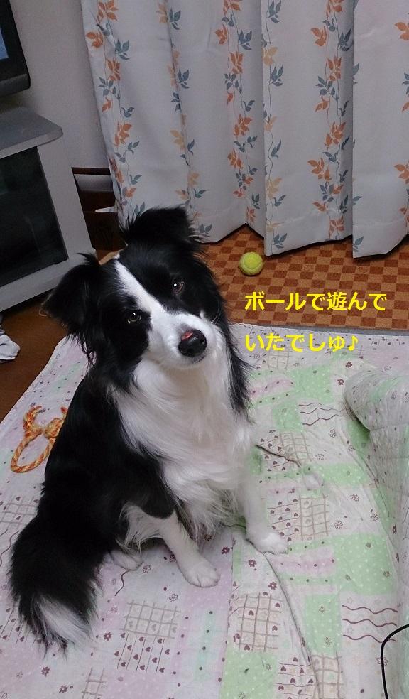 s-IMG_20140117_193343.jpg