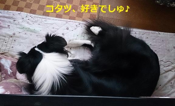 s-IMG_20140129_195133.jpg