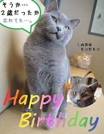 銀平誕生日おめでとうだモン☆