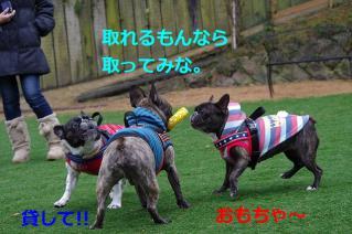 IMGP1648_20130114163302.jpg