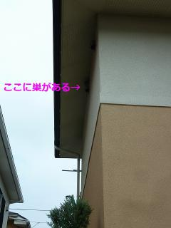 P1450958.jpg