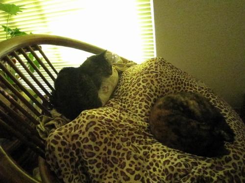 珍しくマルちゃんとアレ君が一緒に寝てるよ