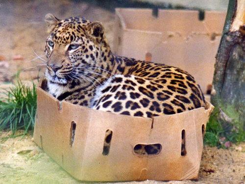 「わざと小さな箱を置いて、猫のトラップとすることに成功した」