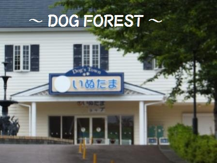 DOG FOREST