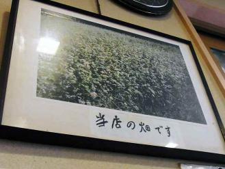 12-6-18 蕎麦畑