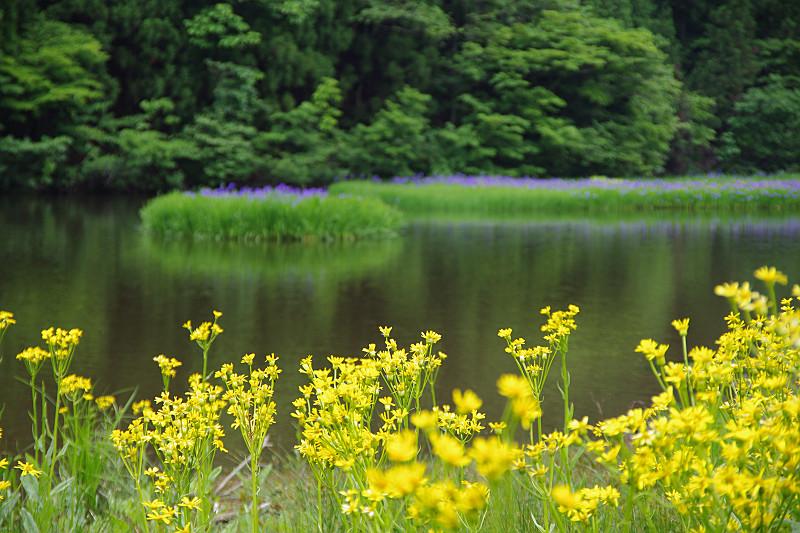 黄色い花の向こうに