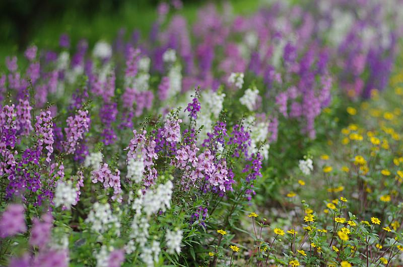 散策路の花壇