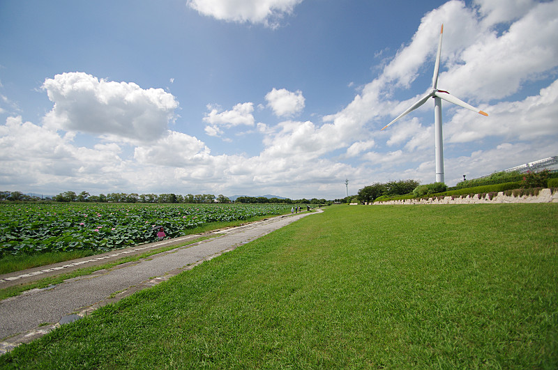 蓮と風力発電