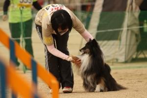 tokushimad 211411_R