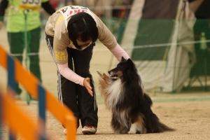 tokushimad 211311_R