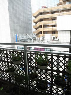 2012_06010030.jpg
